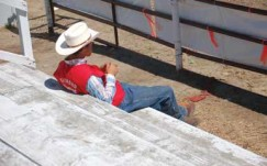 Watching a rodeo