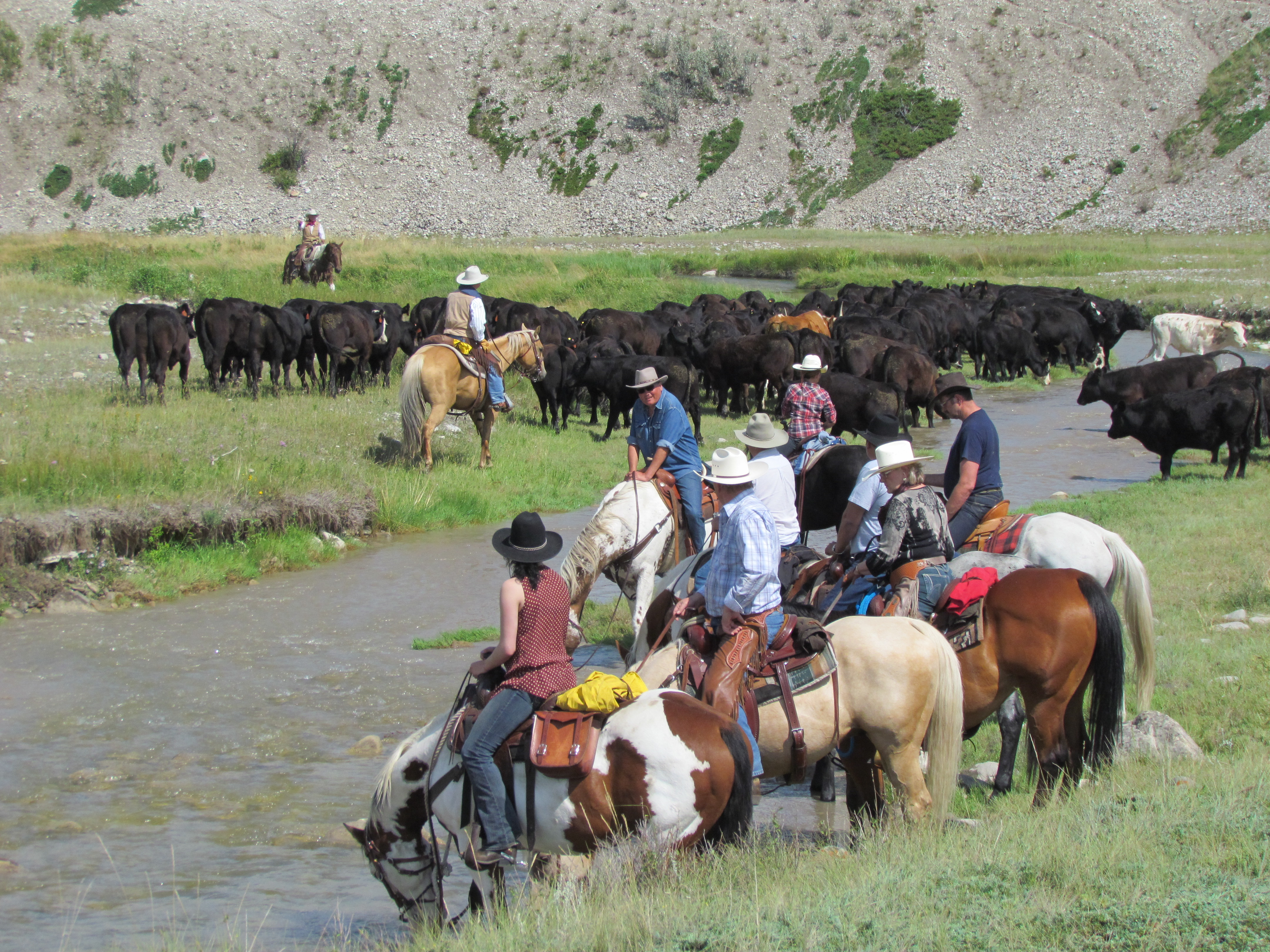 Experience A Frontier Cattle Drive Experience Cowboy
