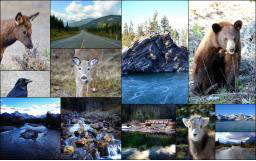 Scenic Photography Tour of Kananaskis