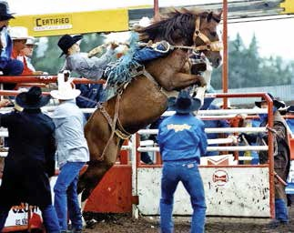 Pro Rodeo Hall of Fame 1 - Photo courtesy of boxjbarranch