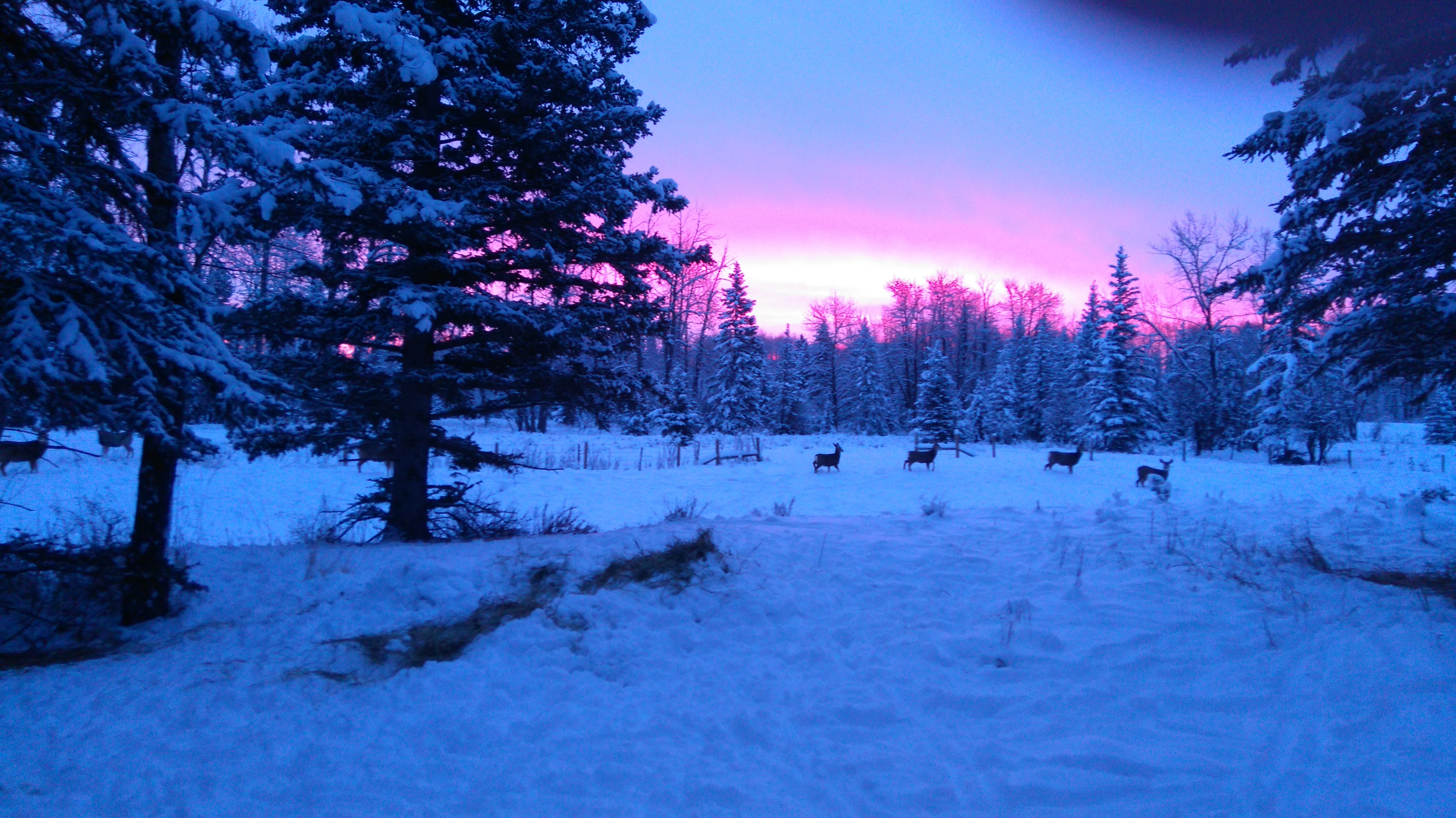 sunrise with deers